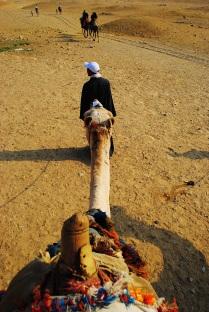 Camel guide, Egypt